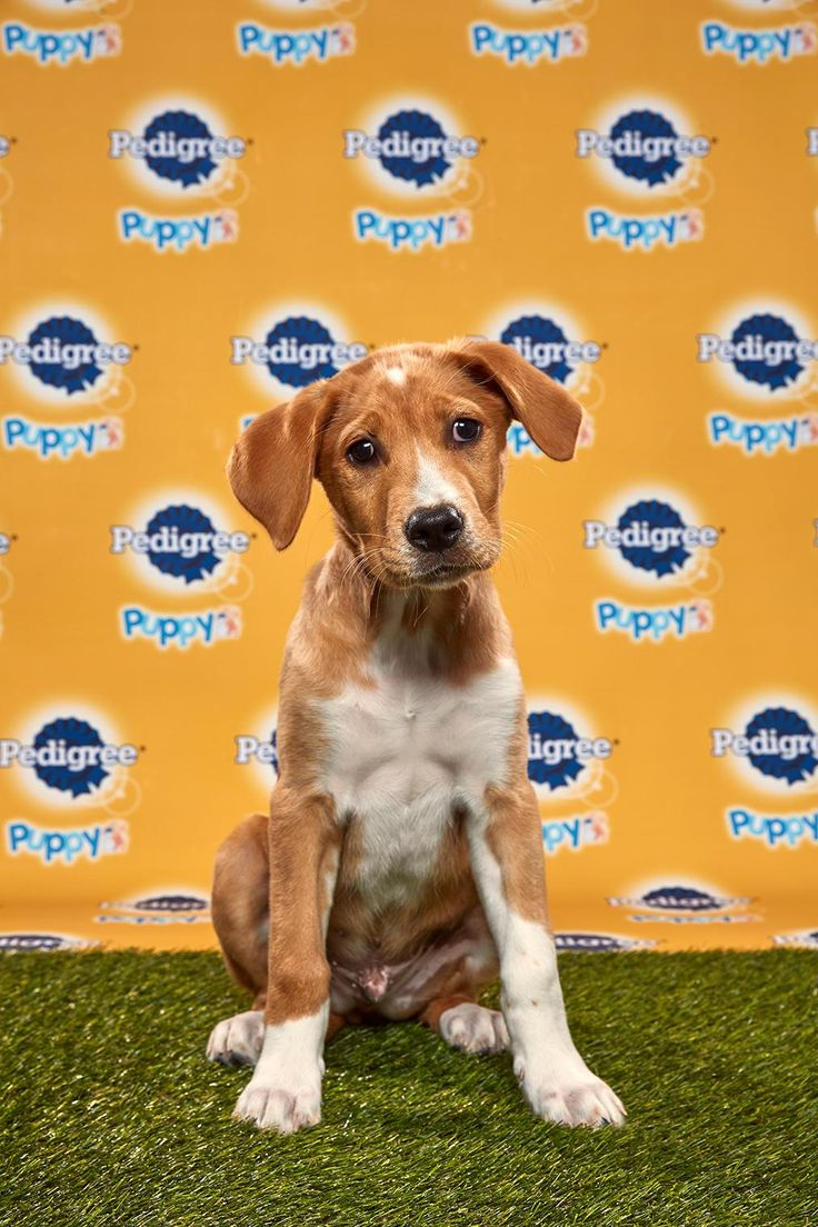Puppy Bowl 2020 Photos in 2020 Puppy bowls, Puppies