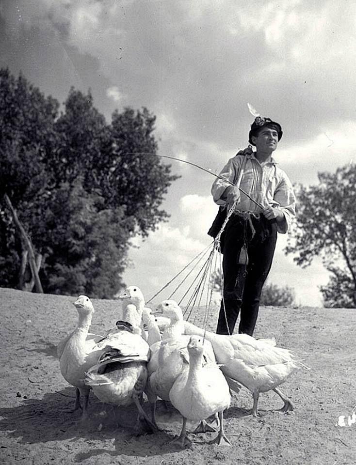 Ludas Matyi (1949)  Soós Imre