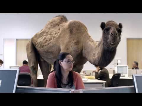 GEICO Hump Day Camel Commercial - Happier than a Camel on Wednesday - YouTube