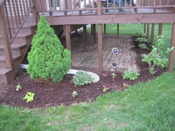 What Plants Will Grow Under A Deck : Ideas for under deck landscaping your decking