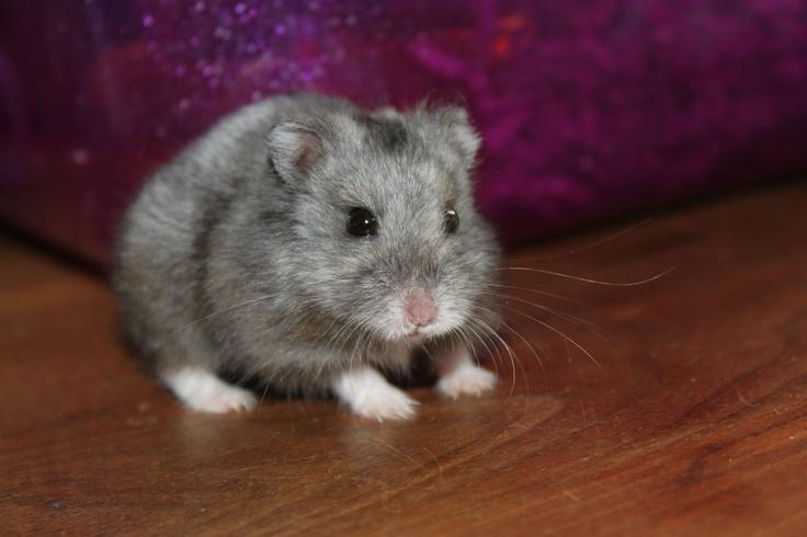 Code Red! Hamster Escape!