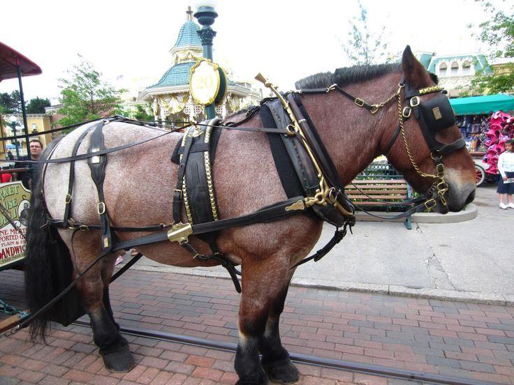 Caballos de tiro- Los caballos de tiro tienen su origen en el siglo XVIII cuando empezaron a definirse y usarse sus rasgos específicos que permiten realizar bien esta tarea. Estos caballos han formado parte importante de la historia como por ejemplo en el tiempo de la revolución industrial, actuando como motores para carruajes y también para equipos o maquinas en la agricultura.