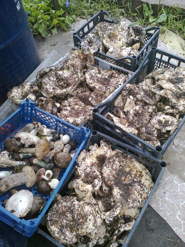Удачный поход за грибами