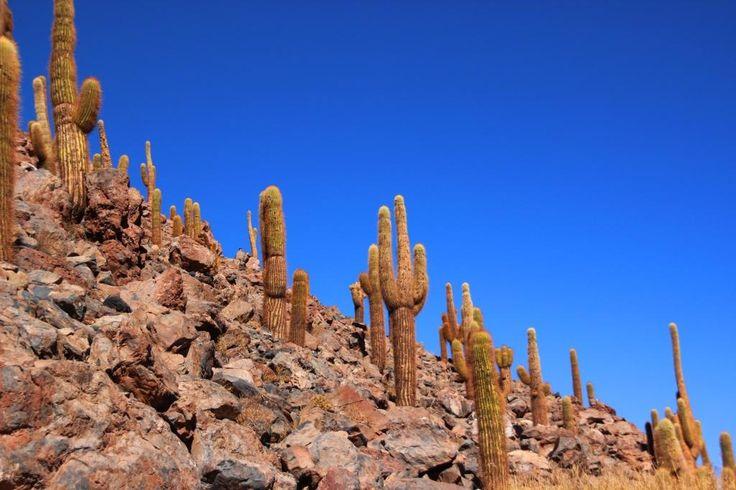 Vale cheio de Cactus