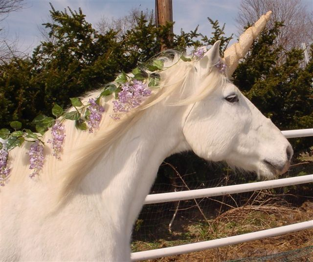 Horse Nation Classifieds: Learn to 'ride your horse into the sunset like a unicorn'  Lol