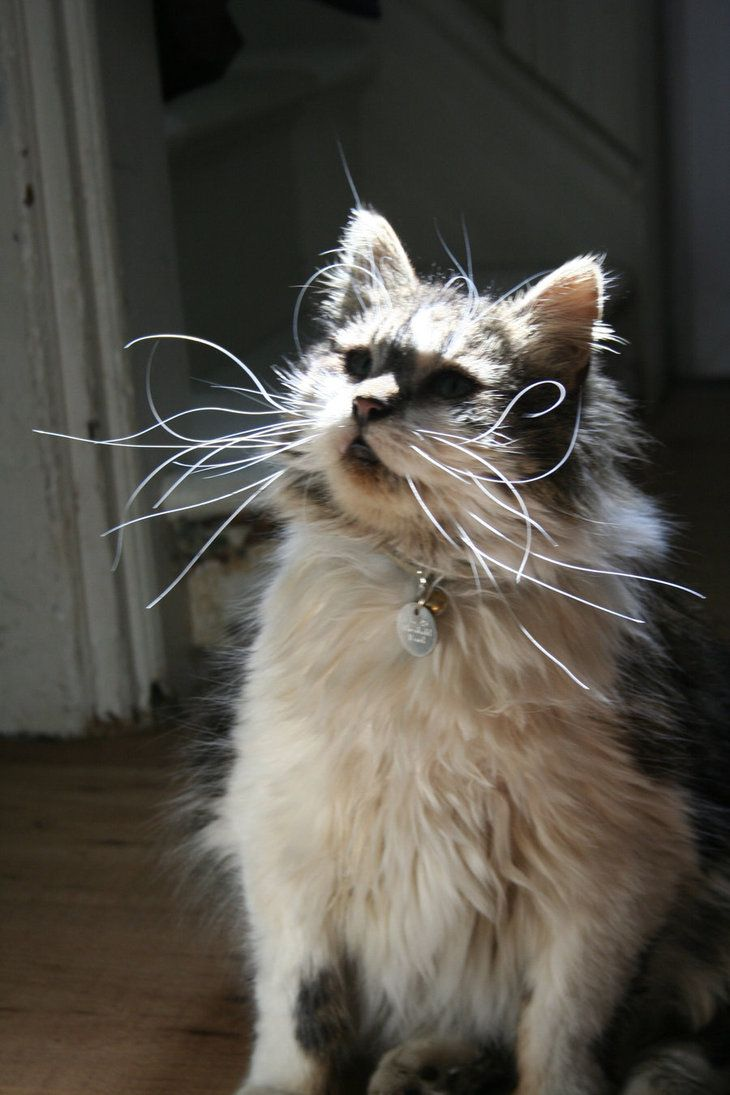 Curly whiskers!  They give him an eccentric look.