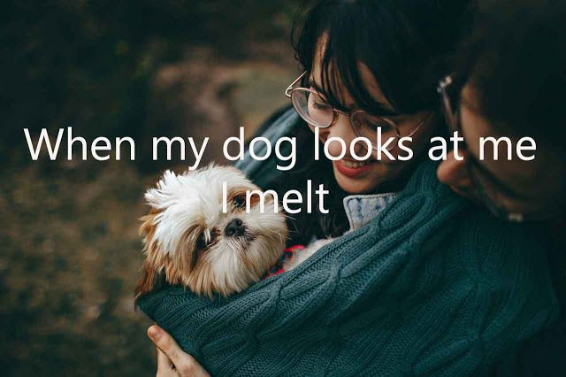 Explore To Get The Collection Of Ig Good Captions For Dogs See More Ideas About Funny Dog Insta Captions For Dog Pictures Dog Captions For Insta Cool Captions