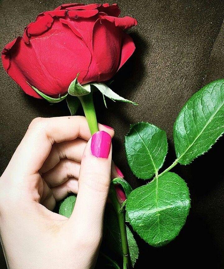 أتخيـلكك و يتـورد الب ـال Red Roses Girls With Flowers Beautiful Roses