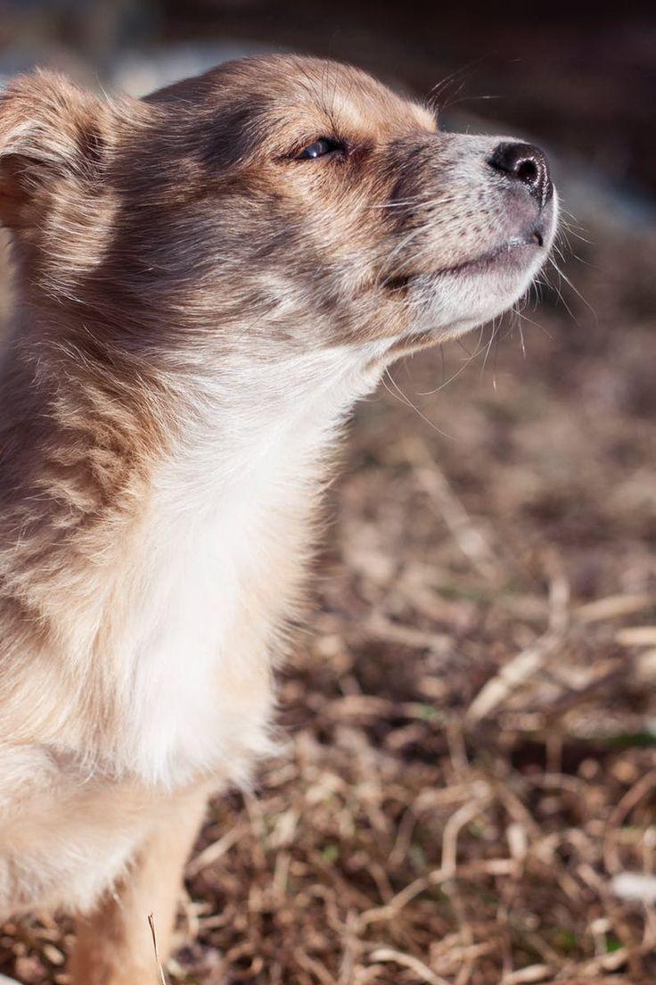 Free stock photo of animal, dog, pet, puppy