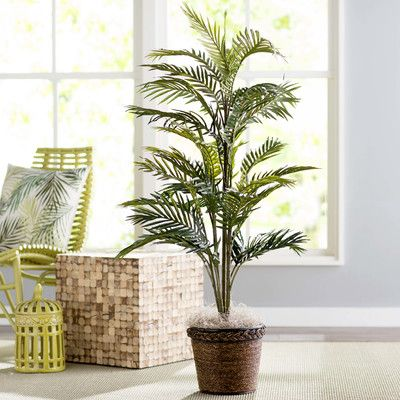 Bay-Isle-Home-Bermudiana-Palm-Tree-in-Basket.jpg (400×400)