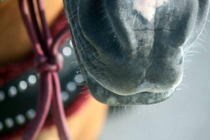 #horse #closeup