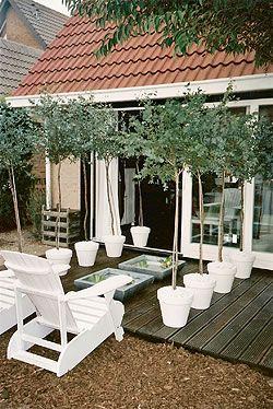 """Verleng je woonkamer bij tv programma          """"In Holland staat een Huis"""" op Texel Styling by Patty van der Horst"""