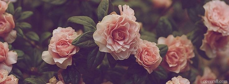 Vintage Roses | Facebook Cover for Timeline
