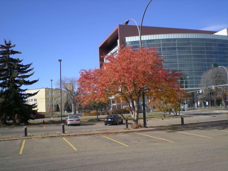 Corbett Hall parking lot, UAlberta with Edmonton Clinic in background