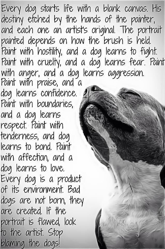 Every dog is a product of its environment. Bad dogs are not born, they are created. cc @unahuelladeamor
