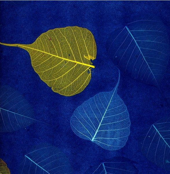 1000 images about the natural furniture company leaf for Wallpaper used in your home in their hands