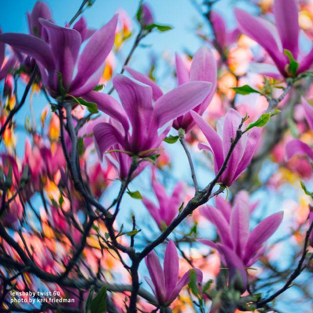 Passend zu dem schönen Tag, ein Frühlingsmotiv. Aufgenommen ist es mit dem neuen Lensbaby Twist 60. Mehr Beispielbilder und Infos findet Ihr unter http://ow.ly/4mTFON #lensbaby#hapateam