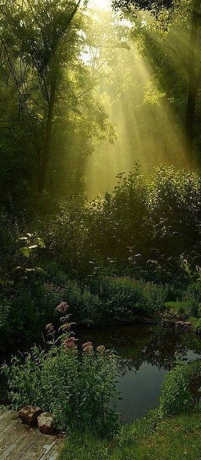 AMAZING LANDSCAPE sun sunlight #quelle www.bellafayegarden.tumblr.com + www.pinterest.com/pin/295126581807981245/