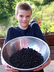 Jake with blackberries ready for blackberry jam making