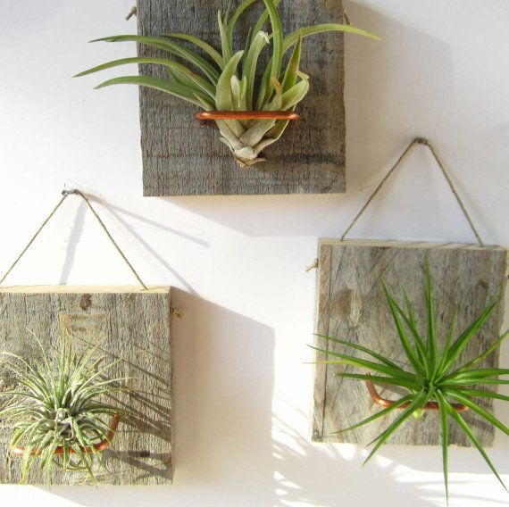 Set of Three Air Plant and Barn Wood Grab Bag Small by NiaCraft, $34.50  Dude look! The are in the AIR!!!!!!!  These would give me more space to have other plants because they would take up no windowsill space.