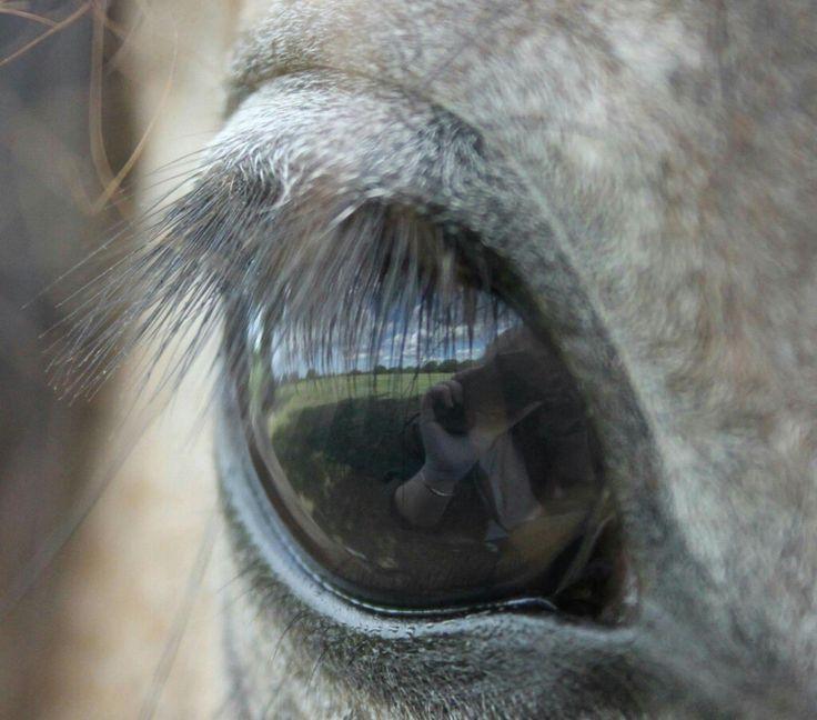 Reflection in Madea's eye