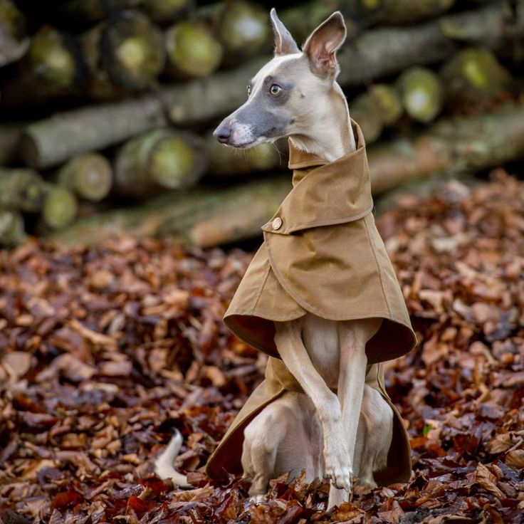 Whippet Dog Coat. Whippet and greyhound Waterproof and Fleece dog ...
