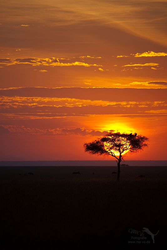 20 Best African Sunsets Images On Pinterest African
