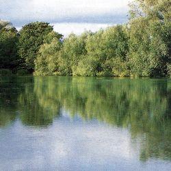 #Redmire #Pool, ein kleiner #See (etwa 1,2 ha) in #England.  Der kleine englische See Redmire Pool liegt in einem Tal nahe der Ortschaft Ross-on-Wye in der Grafschaft Herefordshire, eines der feinsten Karpfenwasser.  http://www.angelstunde.de/redmire-pool/