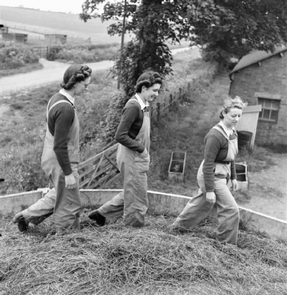 Three members of the Womens Land Army do the Silo-Step as part of their training at the Northampton Institute of Agriculture. The silo is filled with layers of hay and molasses and then the Land Girls stamp around on it until it is reduced to one compact mass. The photograph is taken from inside the silo.