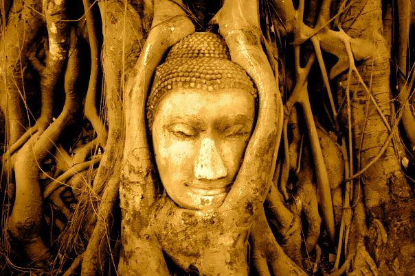 Wise Tree Buddha in #Thailand by Bronwen Gregory