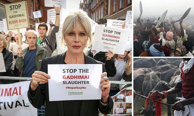 Joanna Lumley urges Nepal to banl sacrifice of 250,000 animals