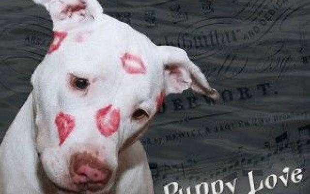Come adottare un cane:consigli #adozionecane
