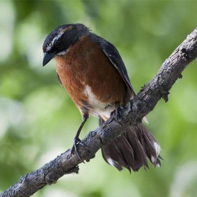 A kilómetros de la Ciudad de Buenos Aires existen lugares perfectos para un pequeño escape. Descubre cada uno de ellos y sus especiales deleites para los amantes del #Birdwatching.