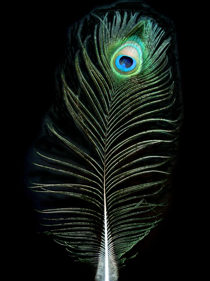 Amazing 3d Peacock Wings Wallpapers 77 Best Peacock Images On Pinterest Peacocks Peacock