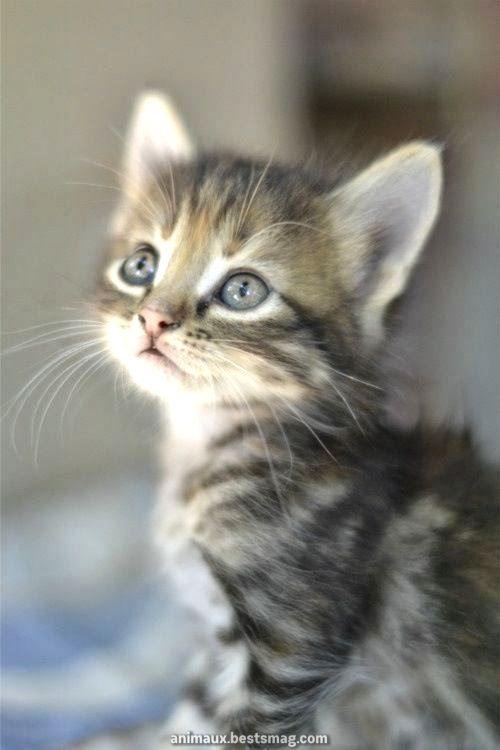 Légendaire Brillants chats et chatons …