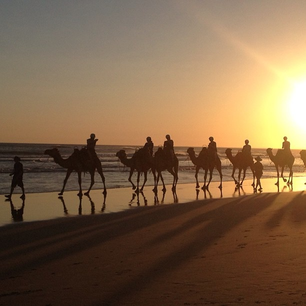 Camel Rides along Birubi Beach and Stockton Dunes, Port Stephens.