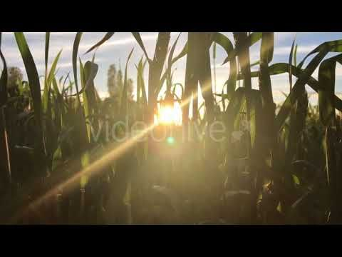 The Field (Stock Footage)