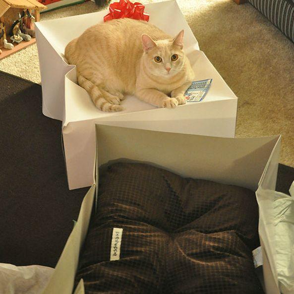 Confira fotos super engraçadas de gatos que ganharam presentes, mas parecem ter confundido um pouco as coisas.