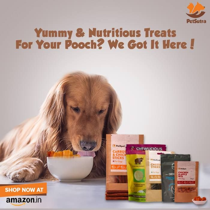 36 best pet food recipes images on pinterest doggies pet food and find this pin and more on pet food recipes by petsutra forumfinder Images