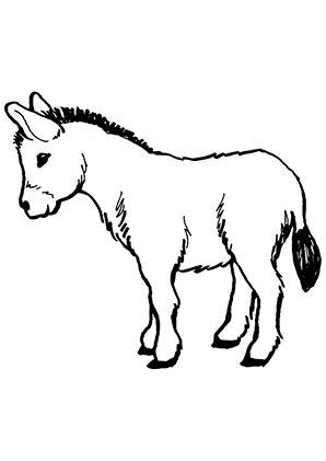 junger-esel 298×421 | malvorlagen, ausmalbilder tiere, ausmalen