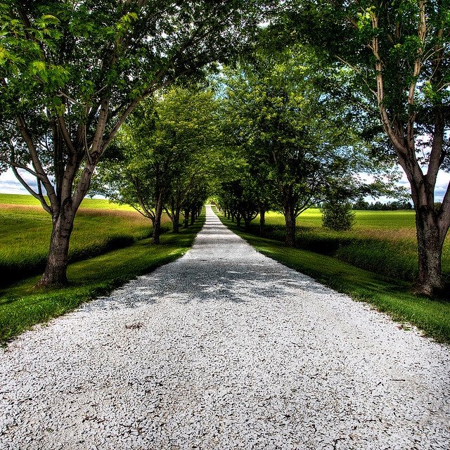 25 Best Ideas About Driveway Lighting On Pinterest: Best 25+ Tree Lined Driveway Ideas On Pinterest