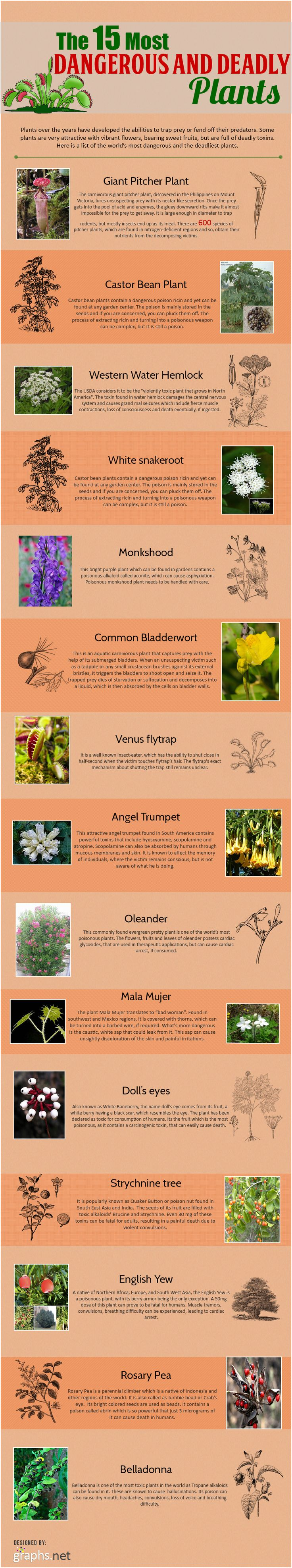 The 15 Most Dangerous and Deadly Plants Infographic
