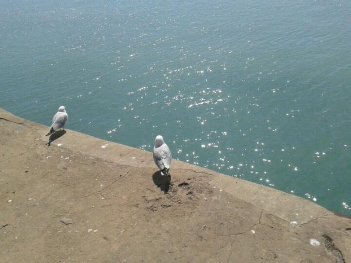 Love birds on Navy Pier