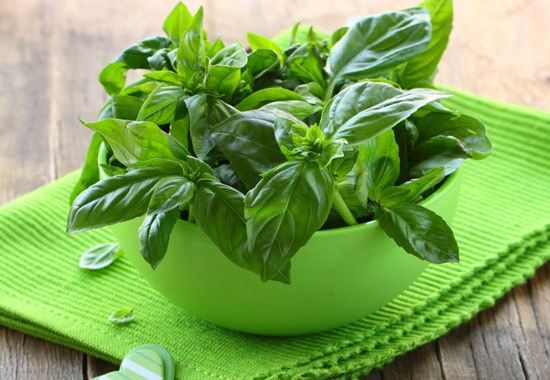 Health Benefits of Tulsi Leaves | Basil Health Benefits