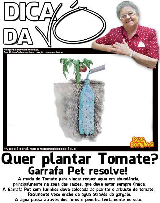 dica da vo como plantar tomate regar irrigacao garrafa pet