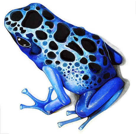 Sapphire Blue Poison Dart Frog - NEW Nature Watercolor Painting by Annya Kai. $18.00, via Etsy.