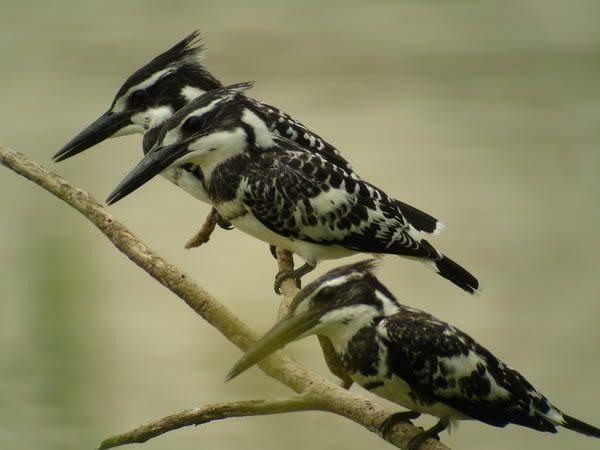 Vogel im Cat Tien Nationalpark - #AsiaticaReisen