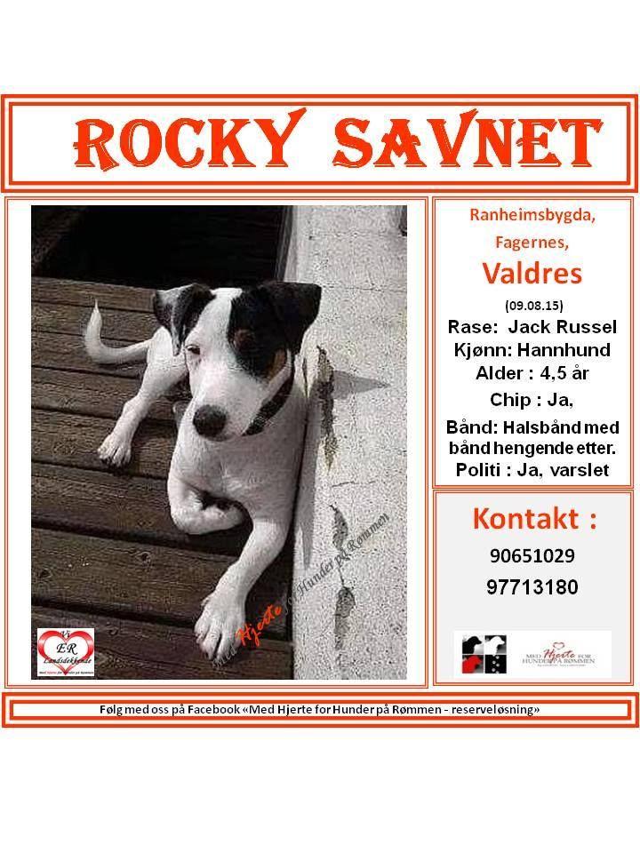 SAVNET : Ranheimsbygda, Fagernes,Valdres (09.08.15) NAVN : Rocky . . RASE : Jack Russel . . FARGE : . . KJØNN : Hannhund . . ALDER : 4,5 år . . VEKT : . . CHIP : ja . . BÅND : Halsbånd med bånd hengende etter . . POLITI/FALCK/VIKING : varslet . .  KONTAKT : 90651029 / 97713180 . . HJERTEkontakt : Lucia: 992 68 386 og Anne B: 92020142 . .