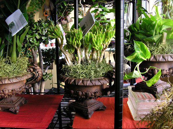Những lưu ý chăm sóc cây trong nhà
