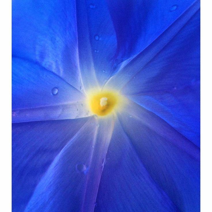 De 270 bsta flowers bilderna p pinterest blue flower with yellow center mightylinksfo